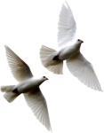 white-doves-psd16781
